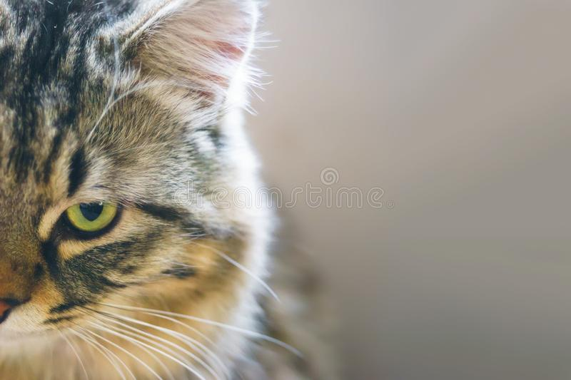 Cat looks into the camera. The cat looks out of the frame. Summer day. Copy space for text stock image