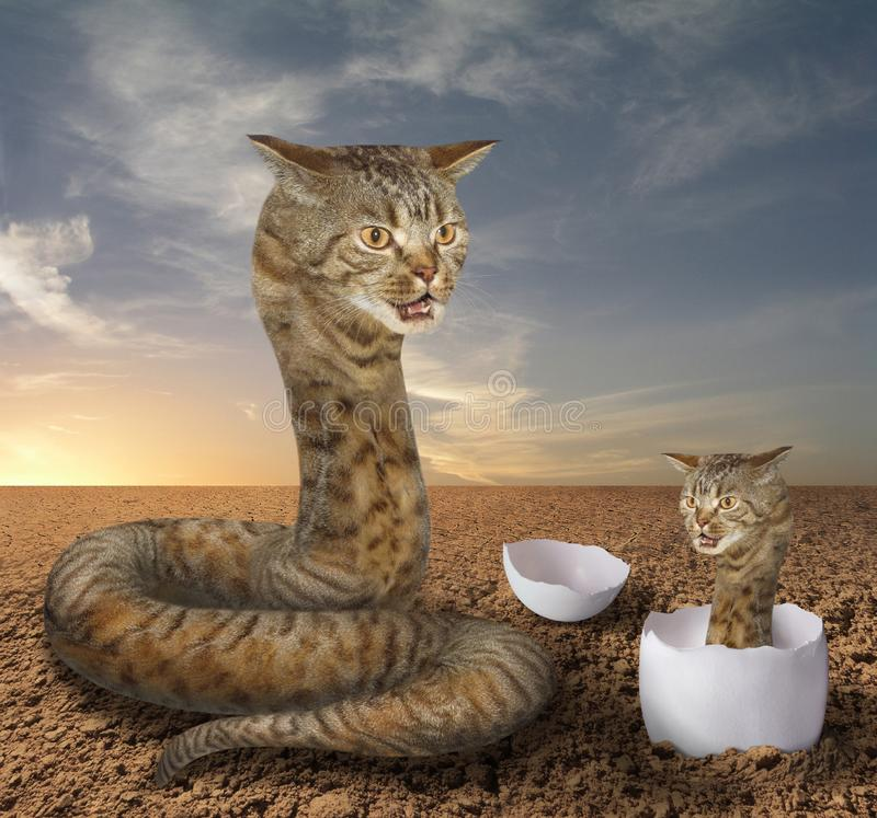 Cat snake and its cub. A cat looks like a big hairy snake. There is its cub in a egg near it stock photography