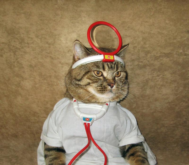 A cat is a doctor. A cat looks like a real doctor stock photos