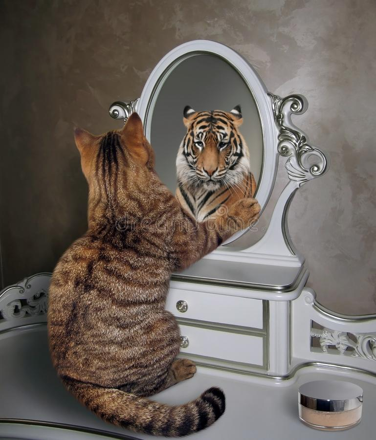Cat looks in mirror 3. The cat looks at his reflection in the mirror. It sees a tiger there stock photography