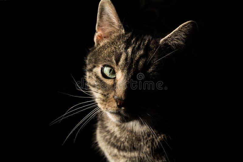 Cat love stock photography