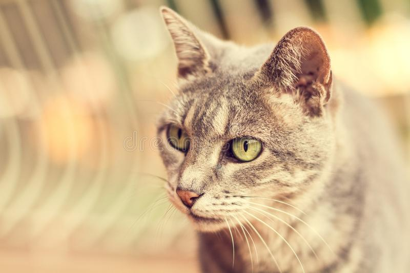 A cat with lovely eyes. A brown cat with lovely eyes royalty free stock photos