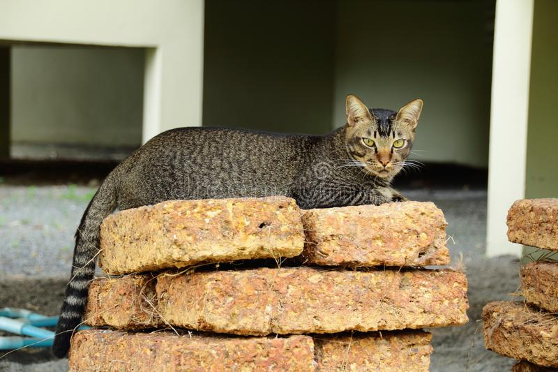 Cat lover, pets, cat, beautiful in nature. royalty free stock photos