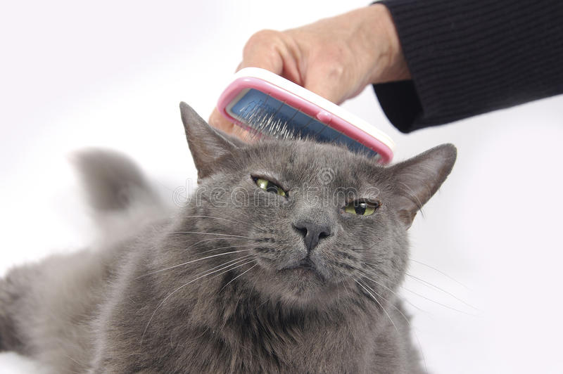 Download Cat loves being brushed stock photo. Image of bristle - 12366024