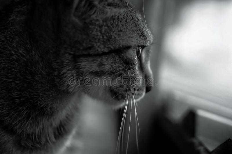 a cat is luring prey royalty free stock photos