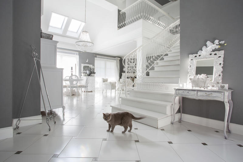 Cat in luxury interior. Horizontal view of cat in luxury interior royalty free stock photos