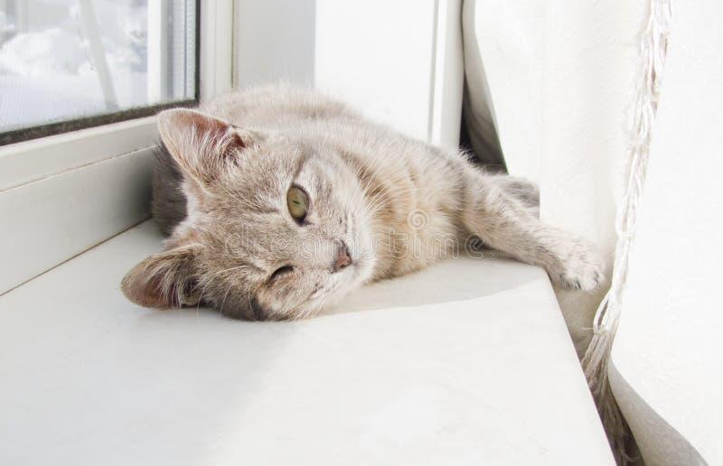 Cat lying. On a windowsill stock photo