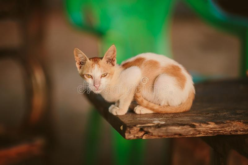 Cat lying on a chair Goa Asia. stock photo