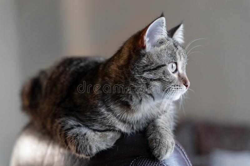 Cat lying on a chair royalty free stock images