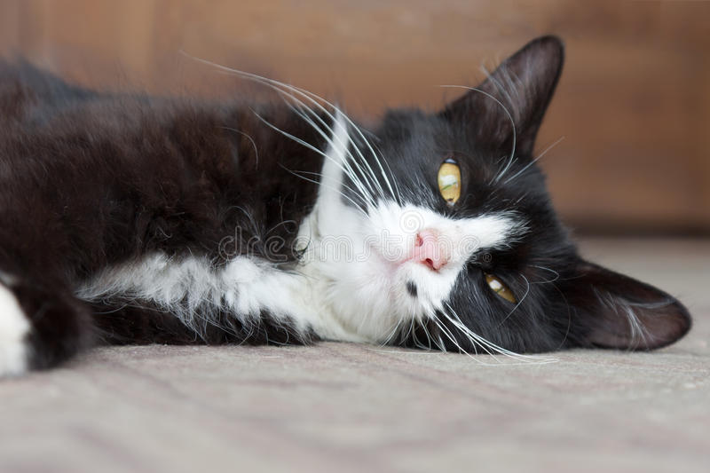 Download Cat Lying On The Floor Resting Royalty Free Stock Images - Image: 21083559