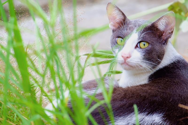 A cat lying in the green grass. Cutely cat lying in the green grass royalty free stock images