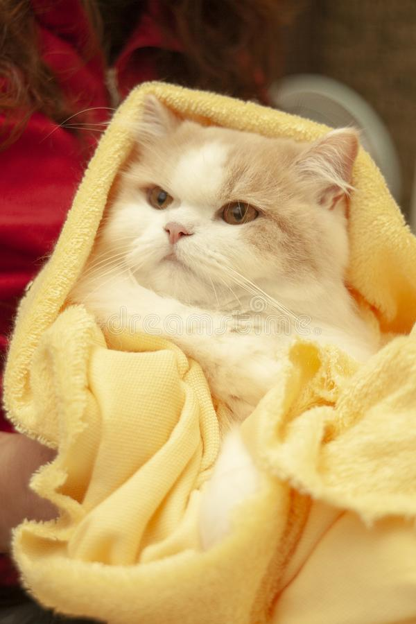 Cat lying on house with nice background color stock photo