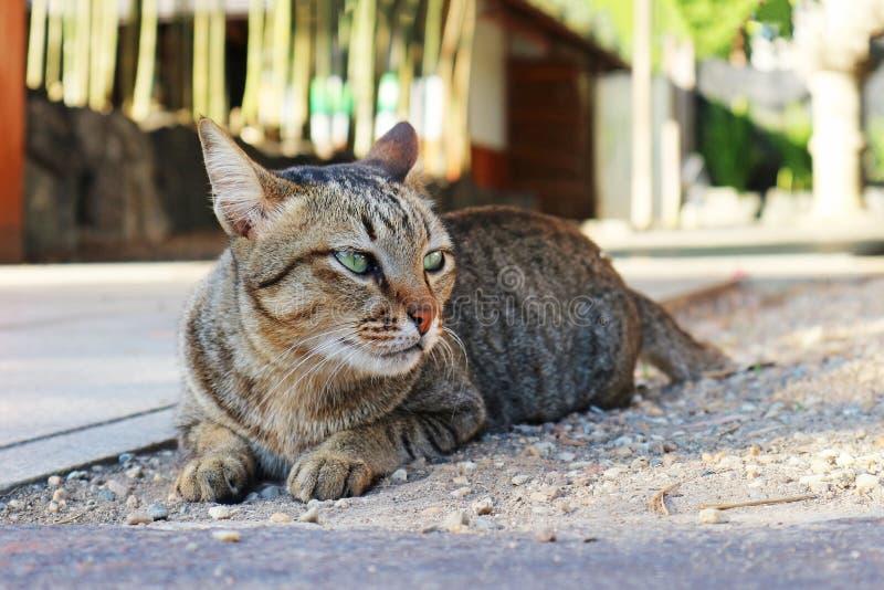 Cat Lying nova bonita na terra imagens de stock