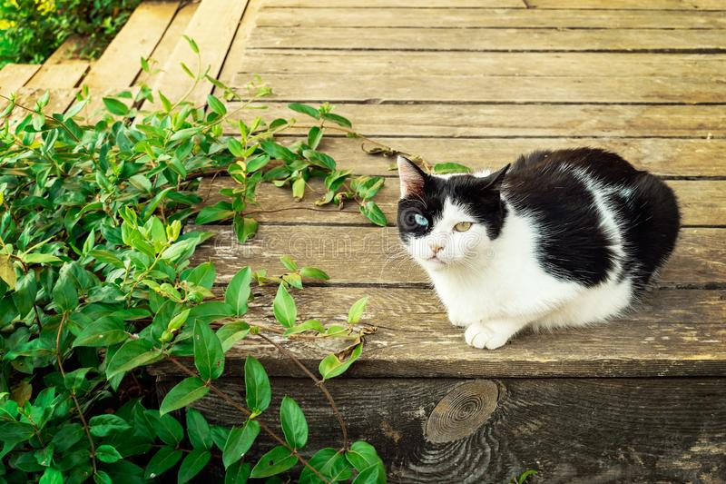 Cat lying on old wooden porch covered with leaves royalty free stock photo