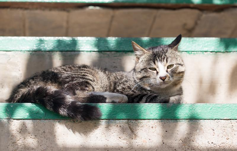 Cat lying on a porch stock photos