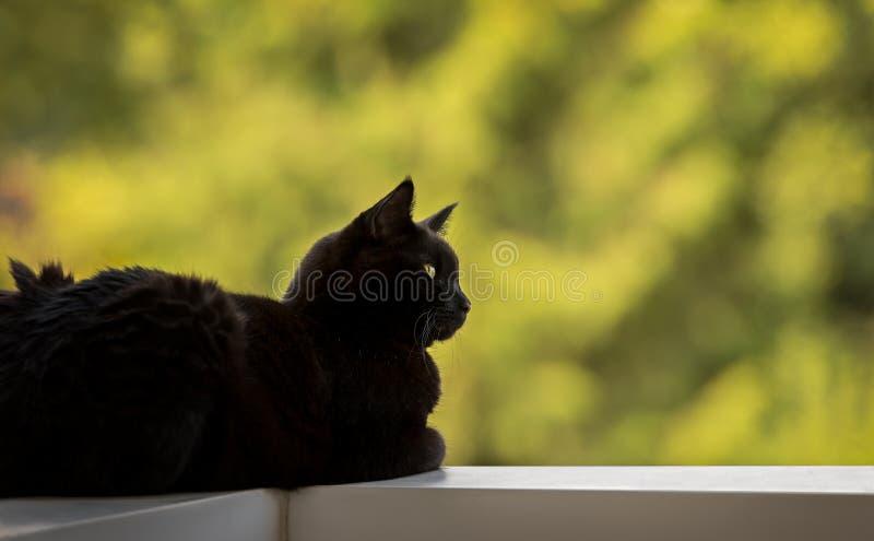 Cat Lying preta masculina em uns trilhos do balcão, olhando à direita fotos de stock
