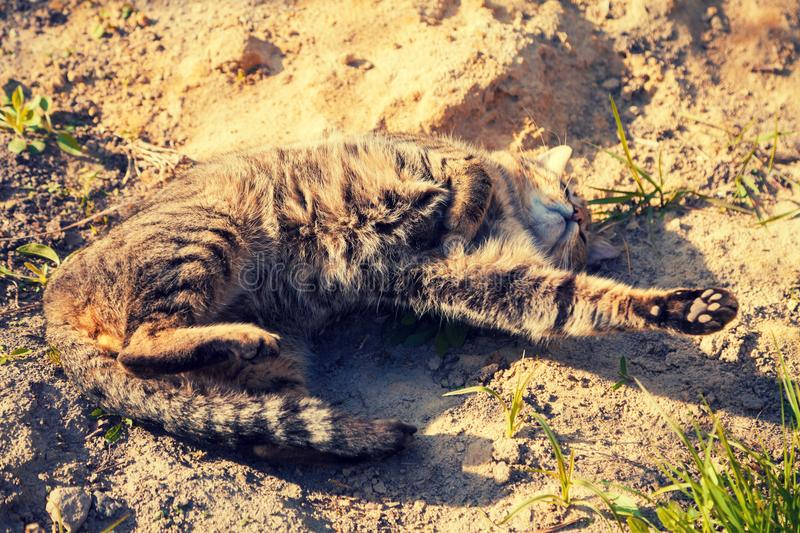 Cat lying on sand on dirt road royalty free stock photo