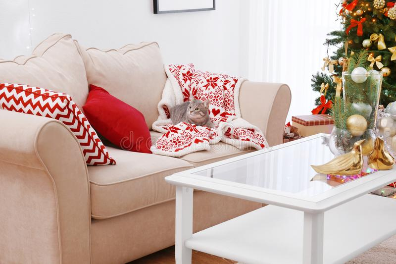 Cat lying on sofa in room decorated for Christmas royalty free stock photos