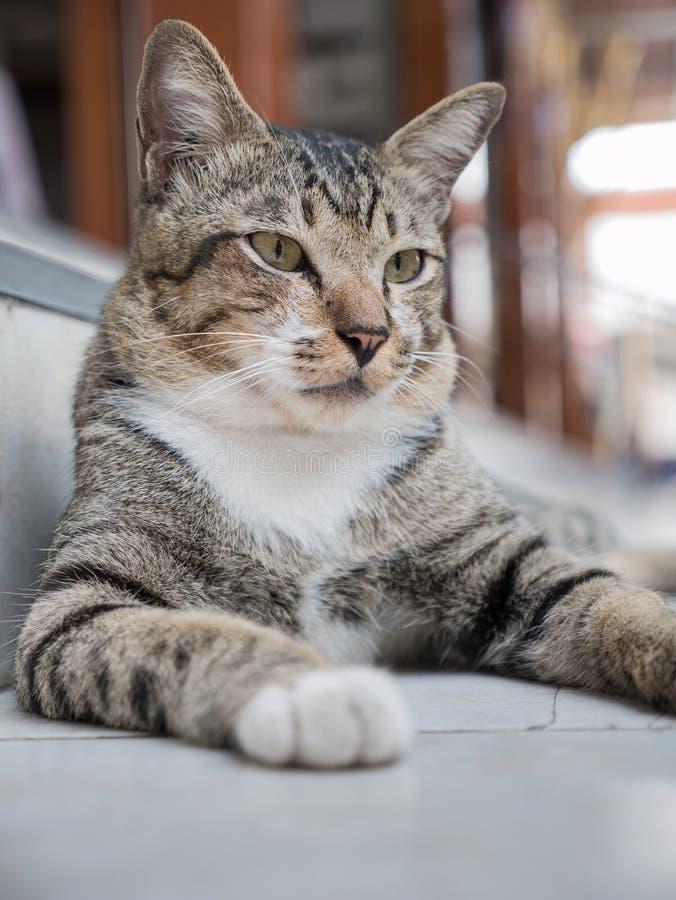 Cat Lying sulla scala fotografie stock libere da diritti