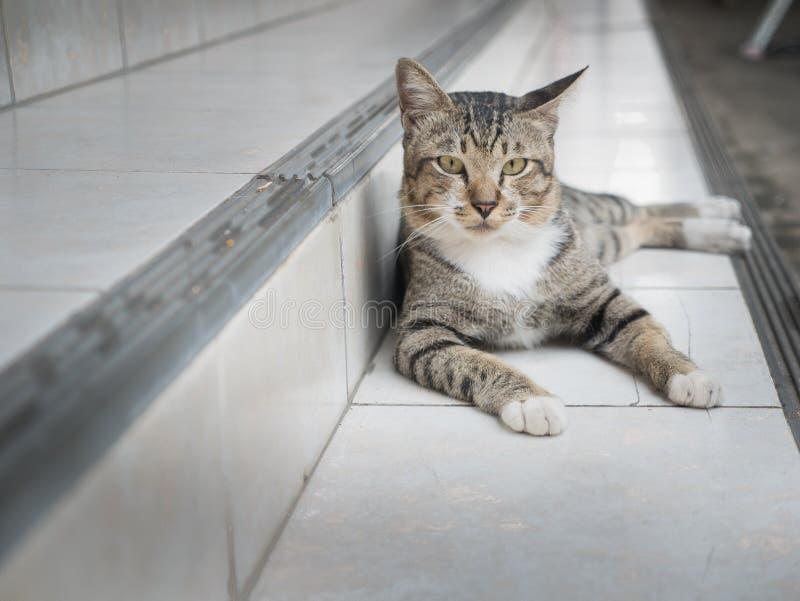 Cat Lying sulla scala fotografia stock libera da diritti