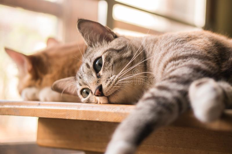 Cats are looking to make faces. stock images