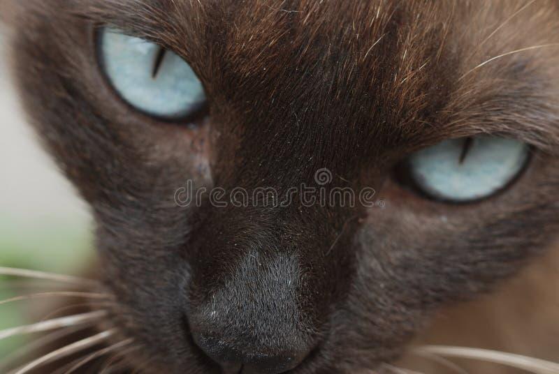 Cat Macro arkivfoto