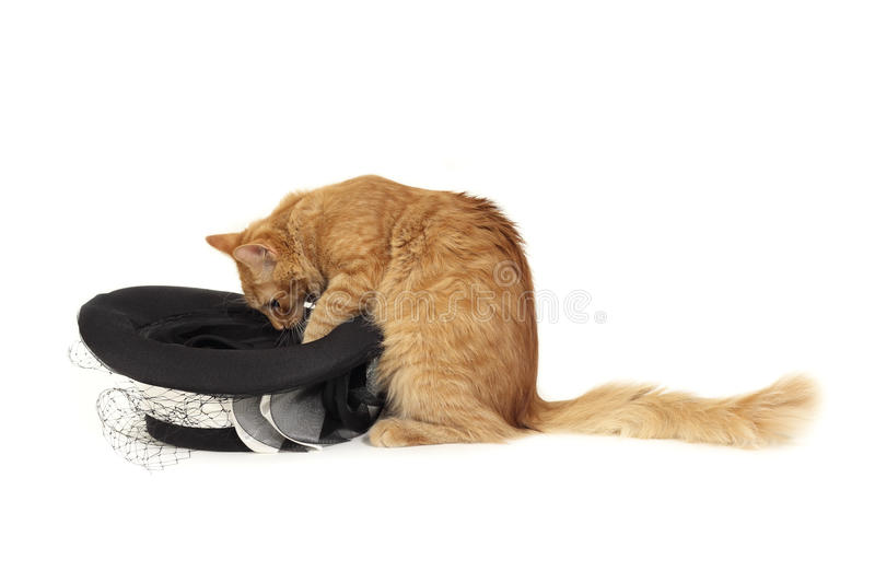 Download Cat magician stock photo. Image of attention, play, childhood - 17871258