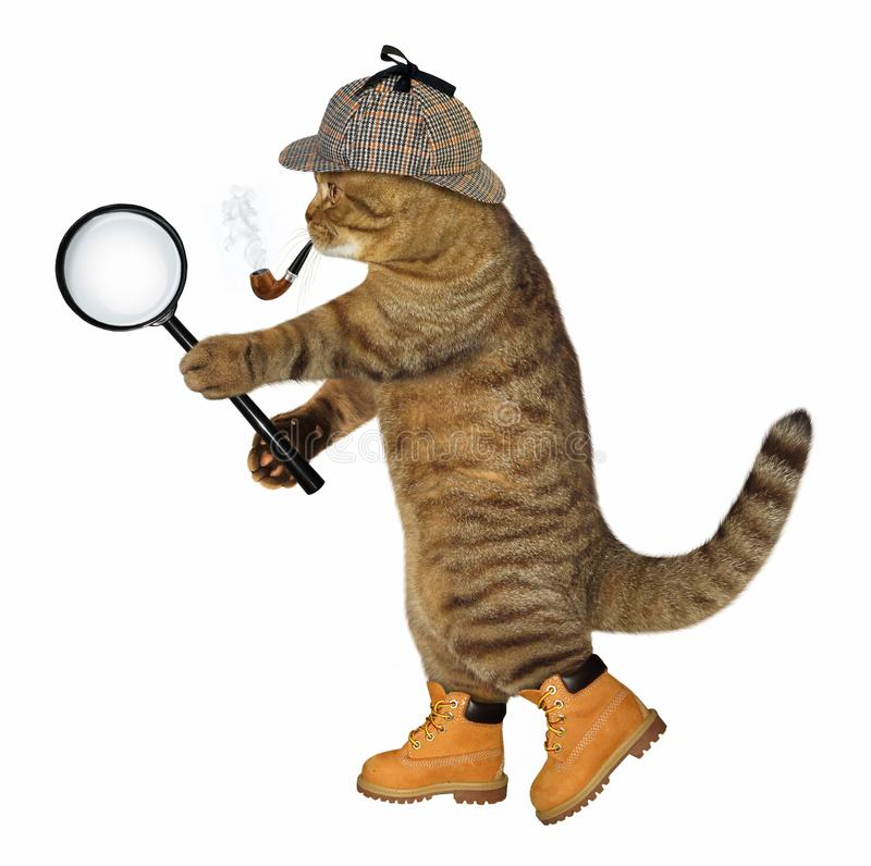 Cat with magnifying glass stock photo