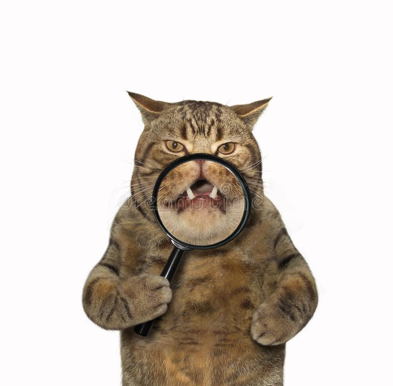 Cat and magnifying glass stock photography