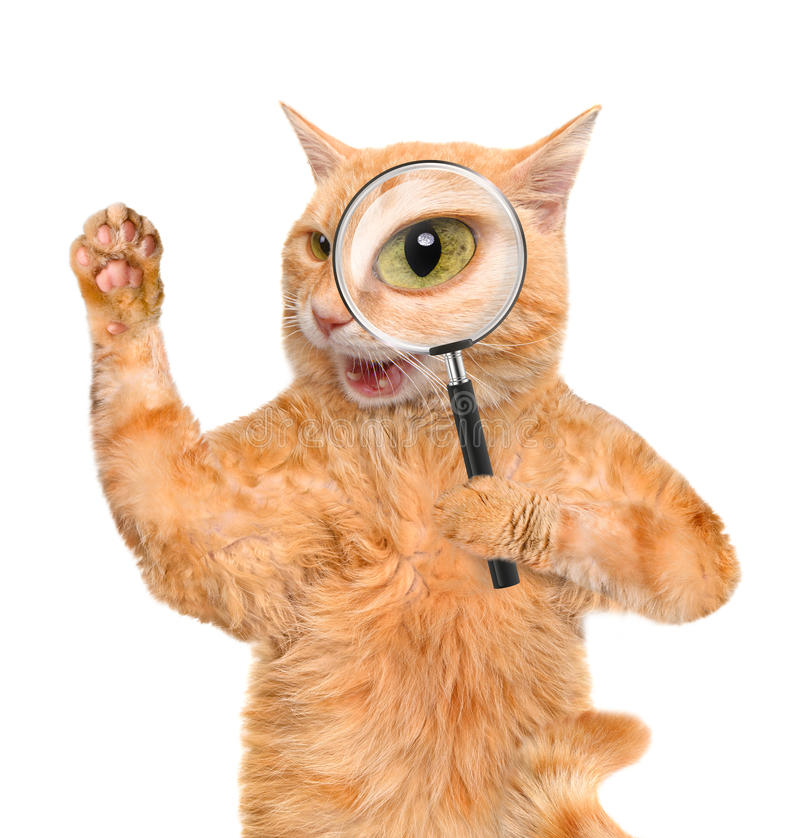 Cat with magnifying glass and searching royalty free stock photo