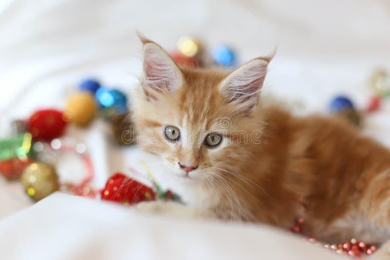 Cat Maine Coon-katje die en met Kerstmisdecoratio liggen spelen stock afbeeldingen