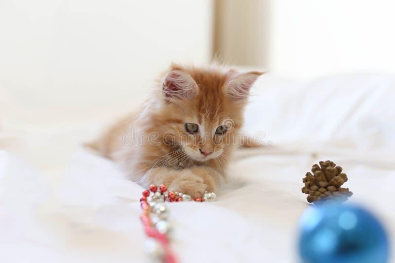 Cat Maine Coon kattunge som ligger och spelar med juldecoratio royaltyfri bild