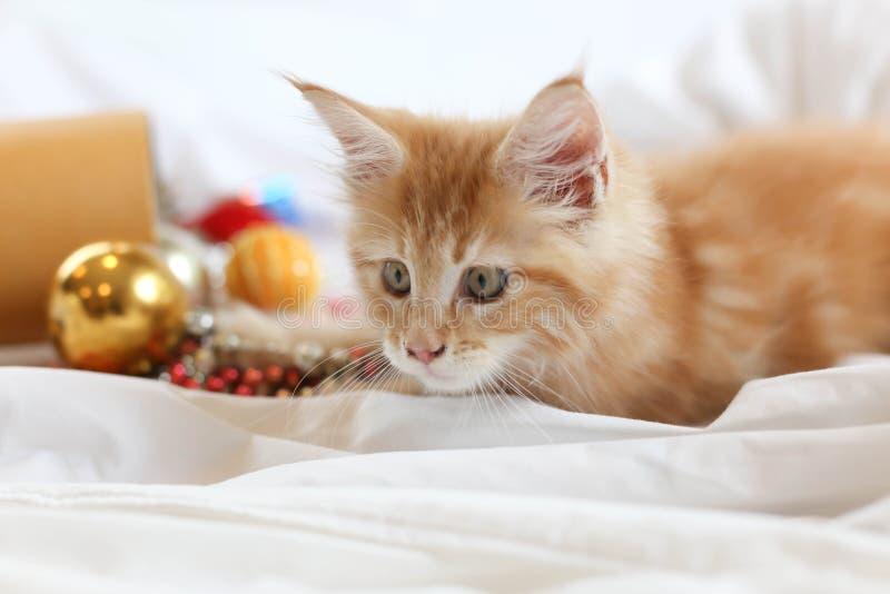 Cat Maine Coon kattunge som ligger och spelar med juldecoratio royaltyfria foton