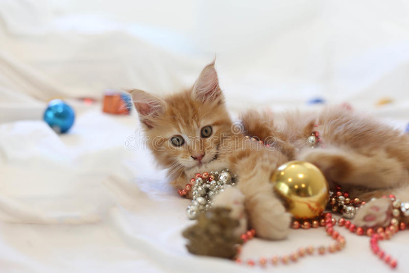 Cat Maine Coon kattunge som ligger och spelar med juldecoratio arkivfoton
