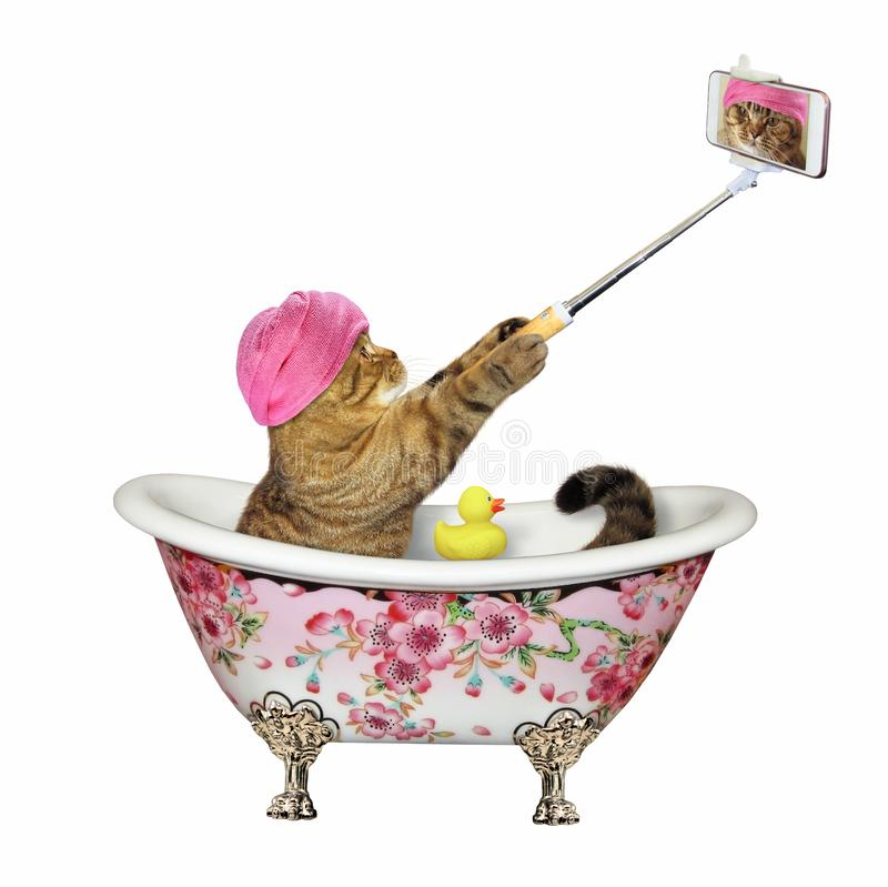 Cat makes a selfie in a color bath. The cat with a pink towel around his head makes a selfie in the bath painted flowers. White background. Isolated royalty free illustration