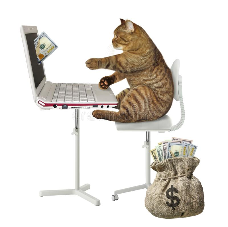 Cat earns money on the computer 2. The cat is making money on its computer. A hundred dollar bill drops from laptop screen. The sack of cash is next to him royalty free stock images