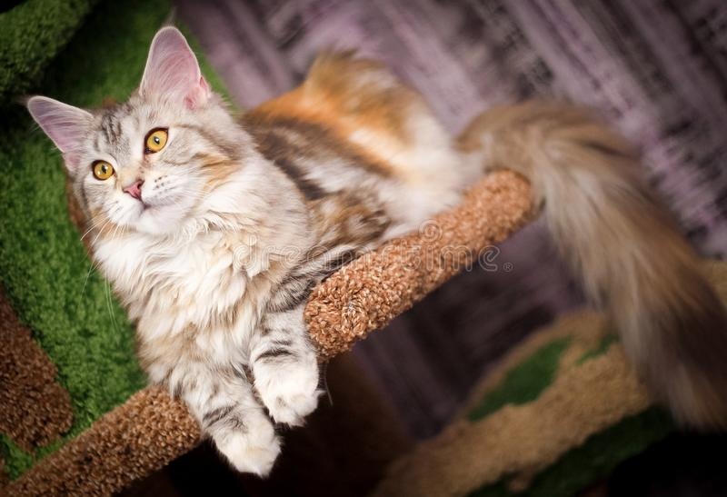 Cat, Mammal, Small To Medium Sized Cats, Whiskers Free Public Domain Cc0 Image