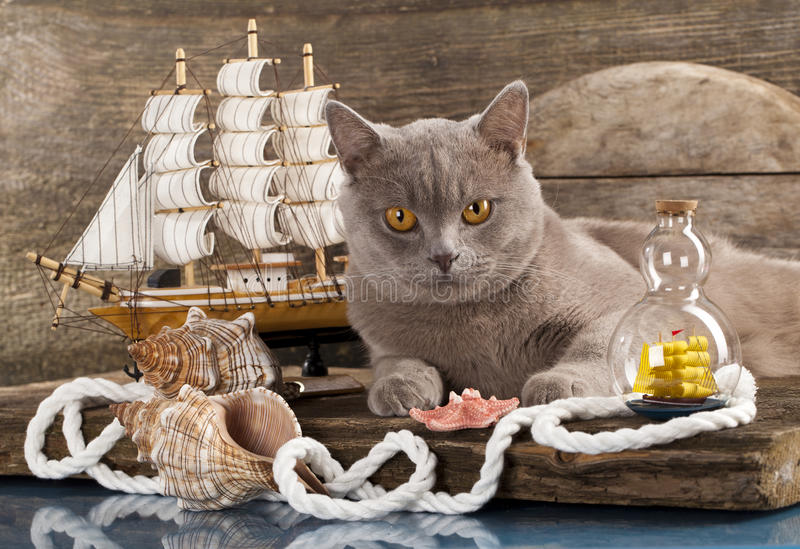 Download Cat and marine sailboat stock image. Image of companion - 25537499