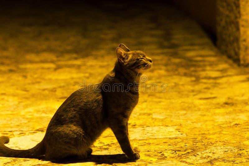 Cat Meow praying stock photography