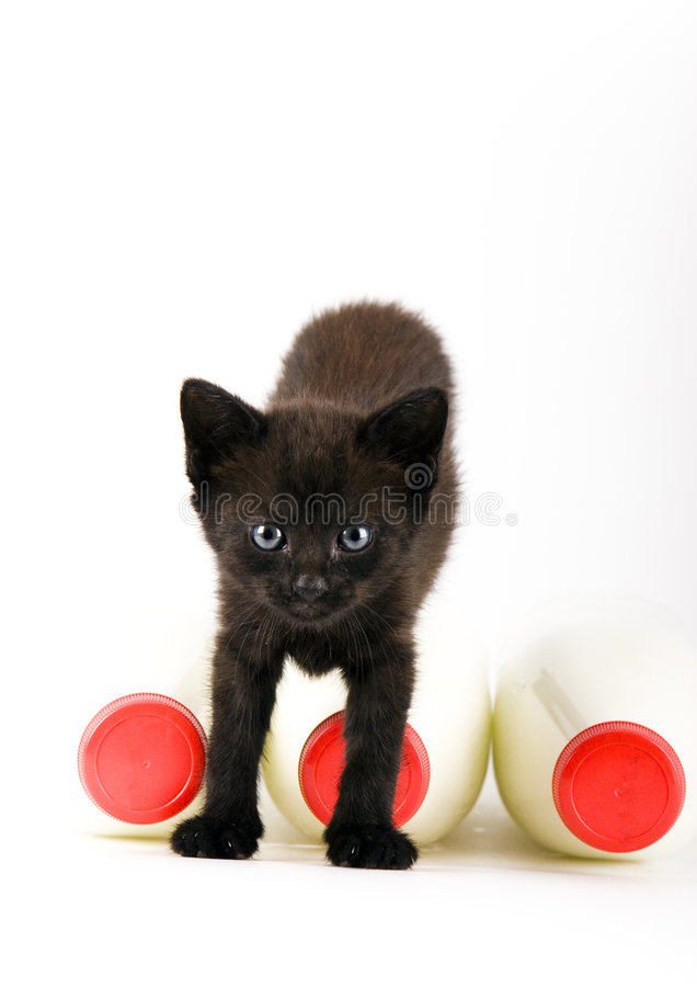 Cat & Milk. Cat - the small furry animal with four legs and a tail; people often keep cats as pets royalty free stock photography