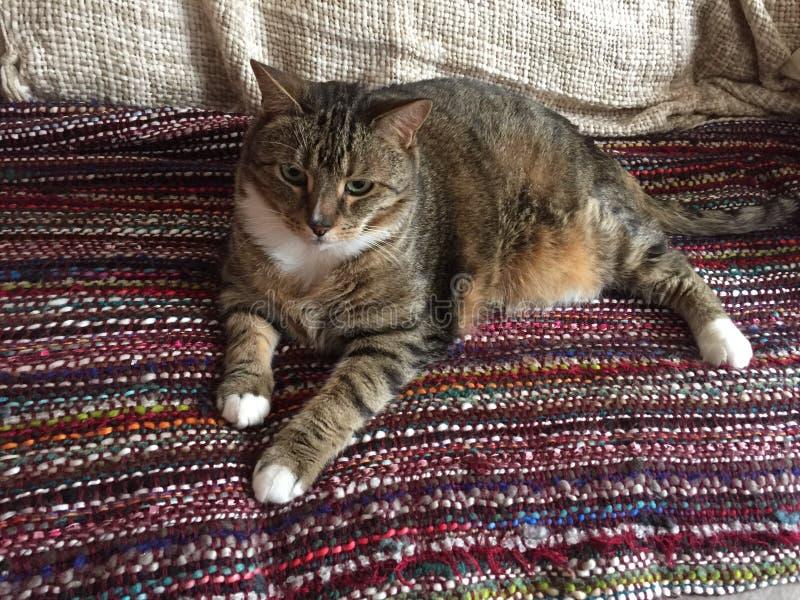Cat Model Resting mayor diabética masculina imagen de archivo libre de regalías