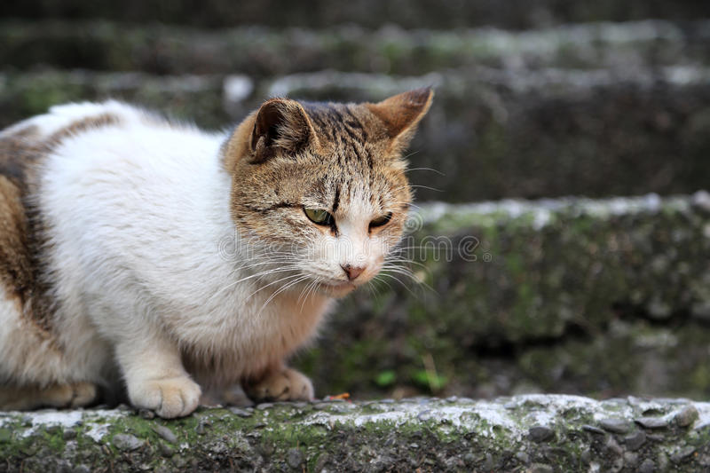 The Ho Tong cat Village royalty free stock photography