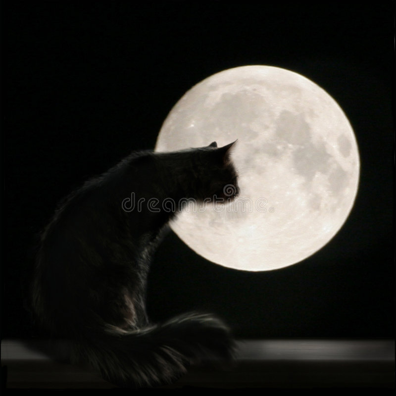 Cat On the Moon. Photo with cat and full moon. Night picture