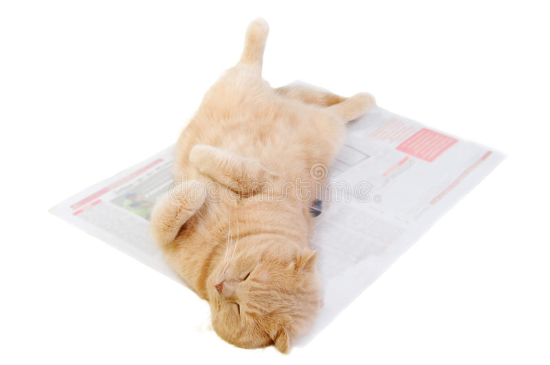 Cat is on the morning newspaper royalty free stock photos