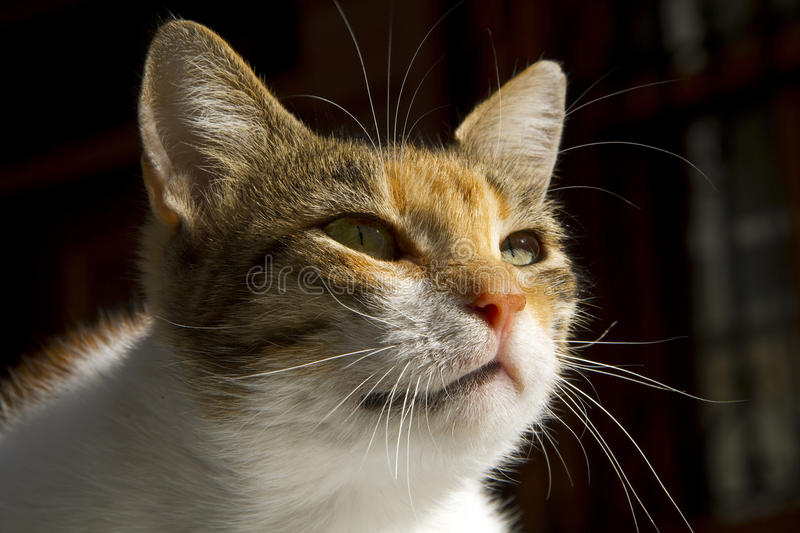 Download Cat and morning sun stock photo. Image of inquiring, background - 16211330