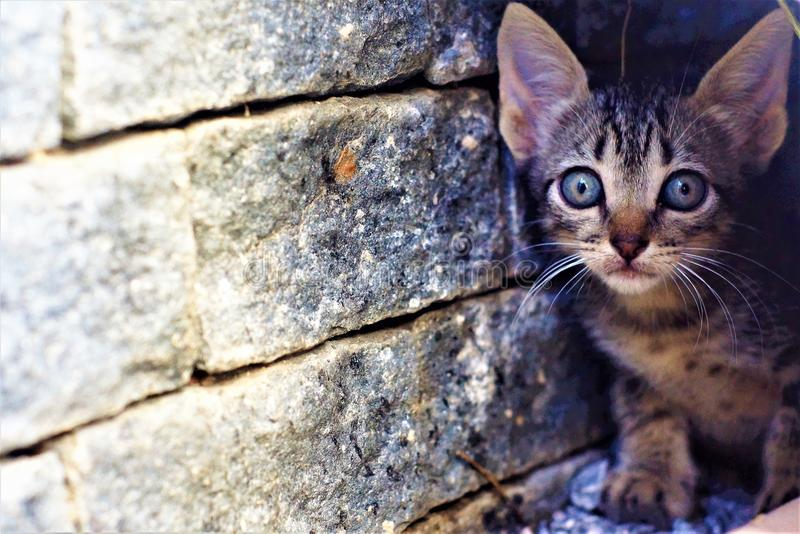 Cat the most beautiful of felines stock images