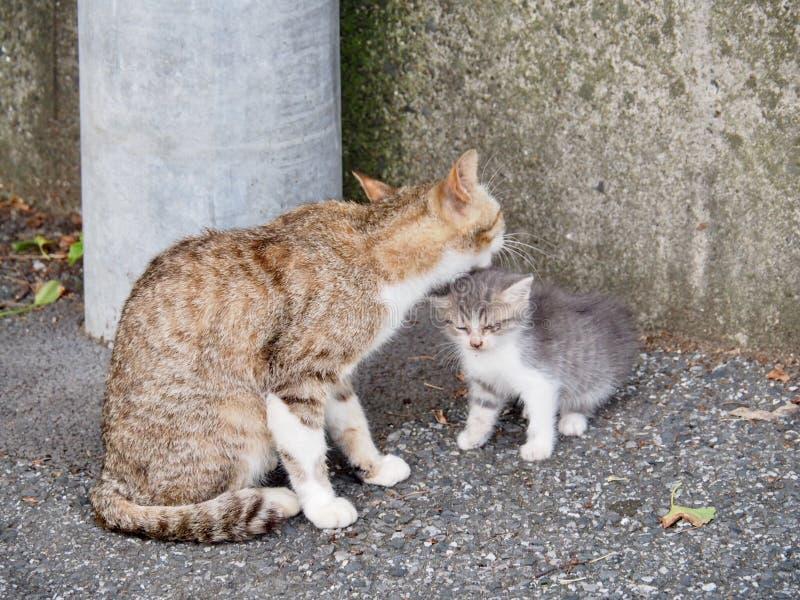 Cat Mother mit kleinem K?tzchen lizenzfreie stockfotos