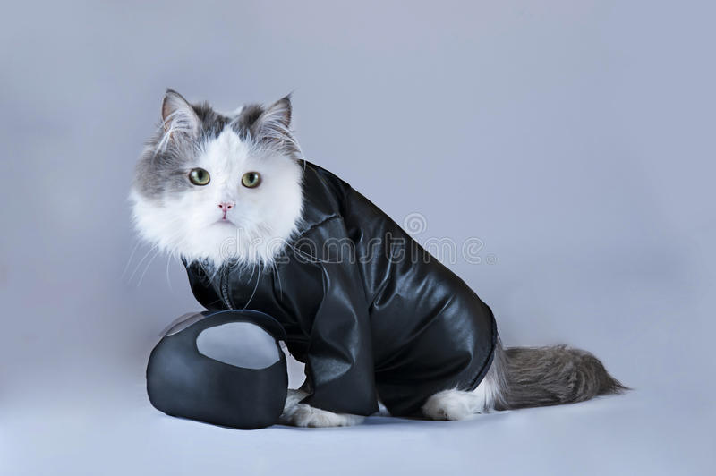 Cat motorcycles royalty free stock images