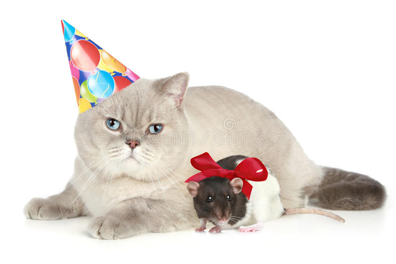 Cat and mouse. British cat and mouse on a white background stock photos