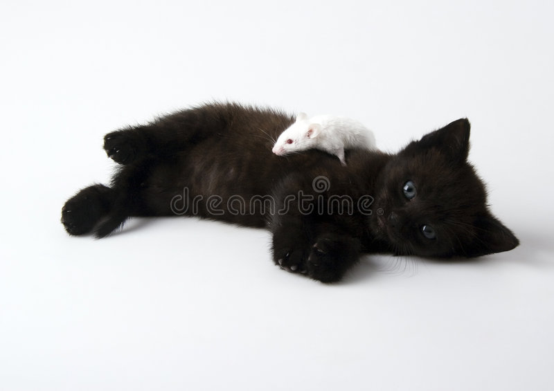 Cat & Mouse. Cat - the small furry animal with four legs and a tail; people often keep cats as pets royalty free stock image